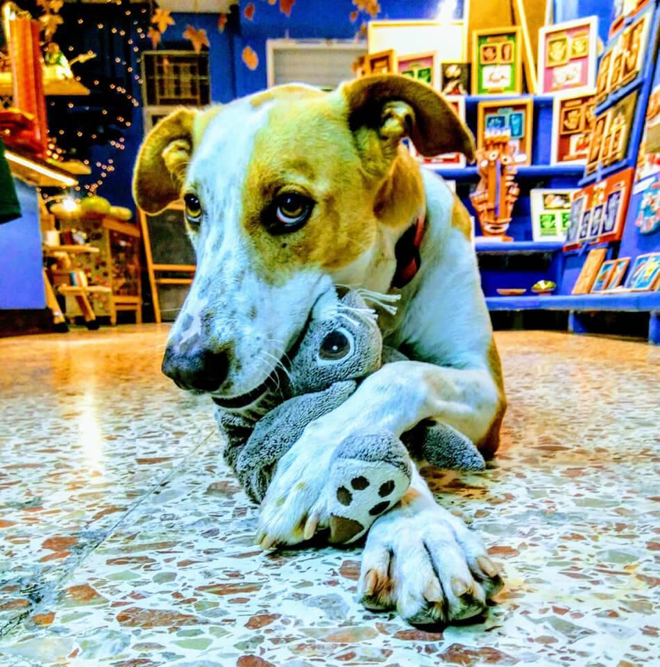 Las huellas de tu perra en cerámica, un regalo original